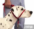 Недоуздок для собак