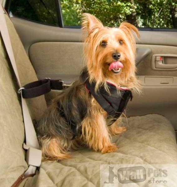Автошлейка для собак