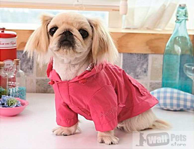 Дождевики для мелких собак
