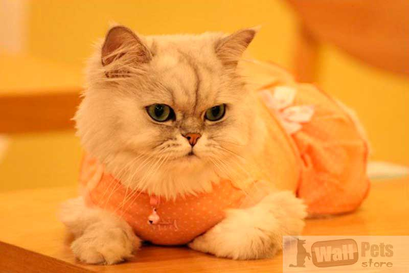 Платье для кошек в горох