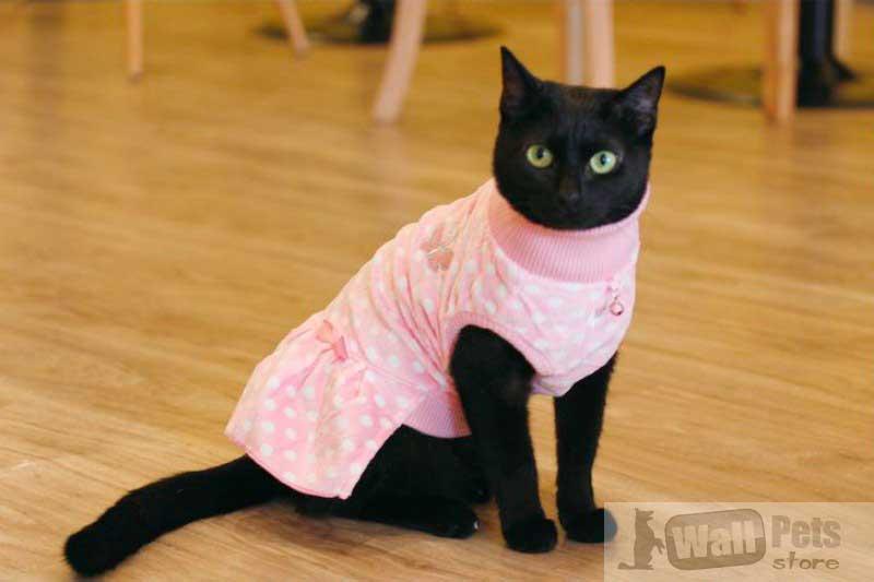 Платье для кошек в горох, одежда для кошек