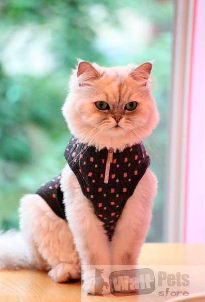 Шлейка для кошек в горох