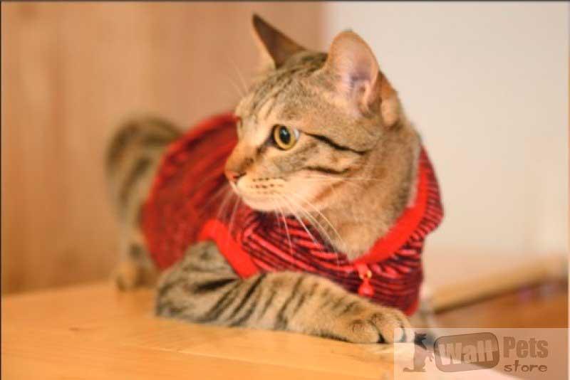 Свитер для кошек TOBY ( одежда для котов)