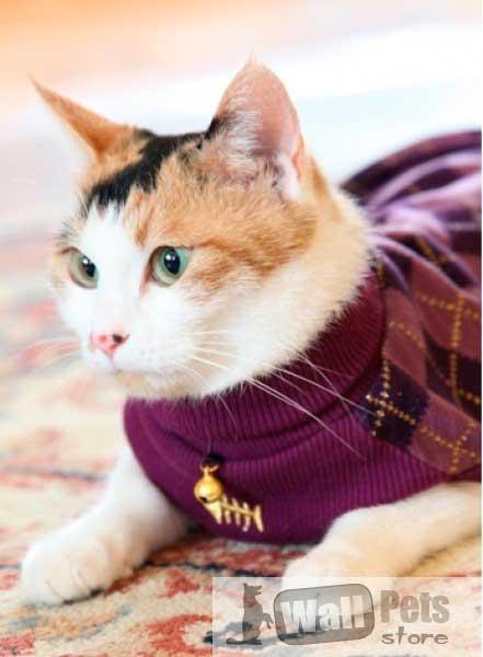 Свитера для кошек