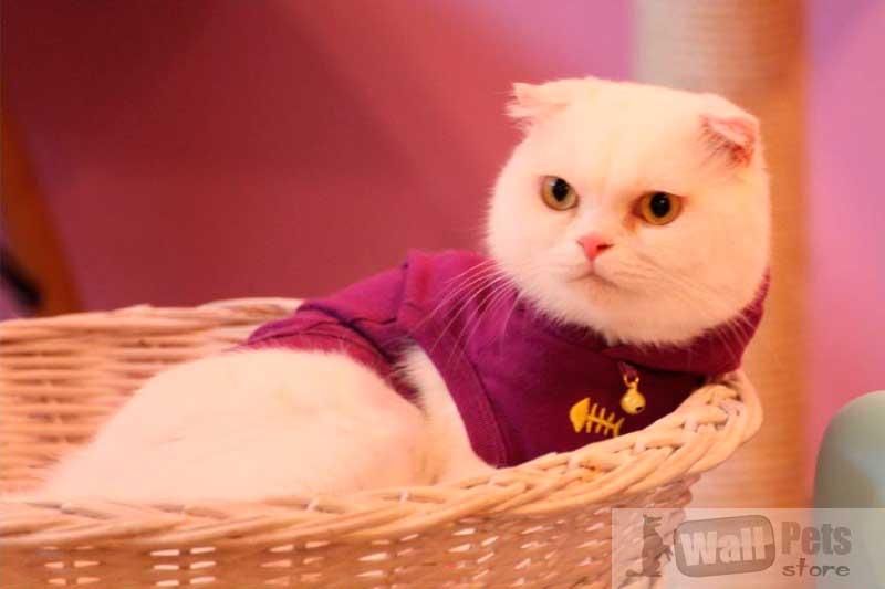 Толстовка для кошек, одежда для кошек интернет магазин