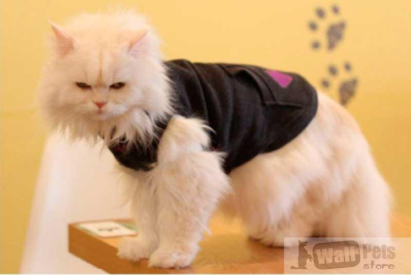 Толстовка для кошек, одежда для котов