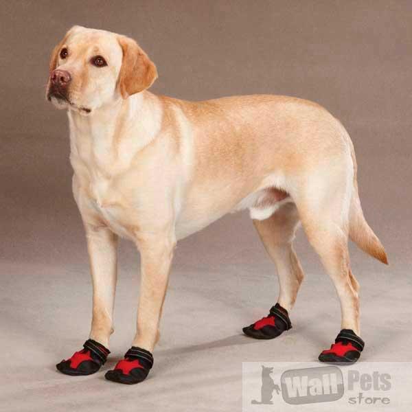 Универсальная обувь для собак