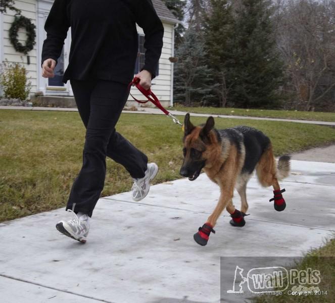 Универсальная, не промокаемая обувь для собак