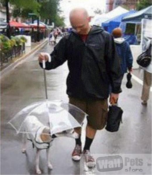 Зонт-поводок для собак