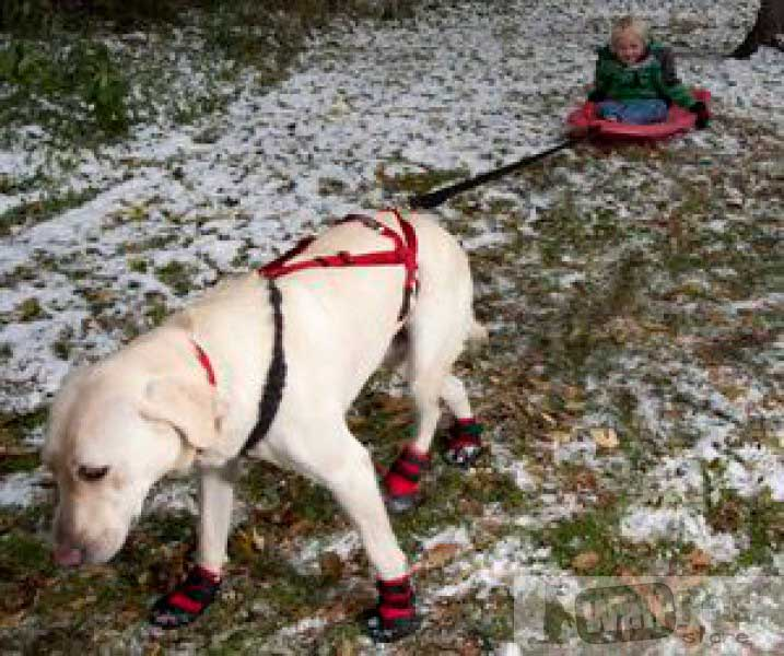 Шлейка для ездовых собак