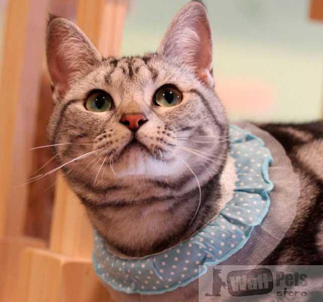 Ошейник на кошку,  кружевной