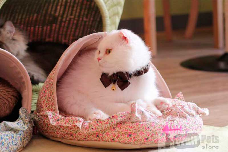 Лежаки для кошки