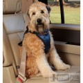 Авто шлейка люкс для средних собак