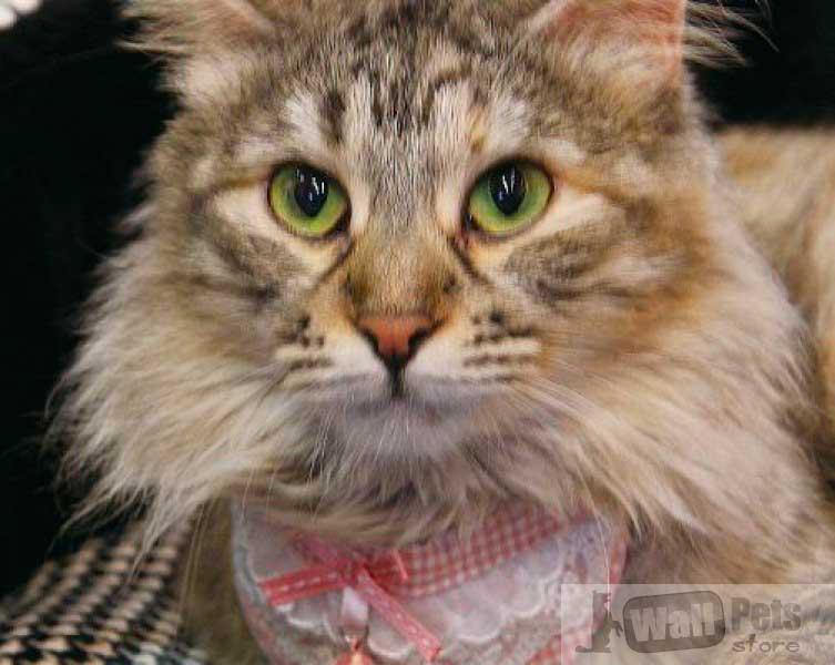 Ошейник на кошку фигурный с кружевом