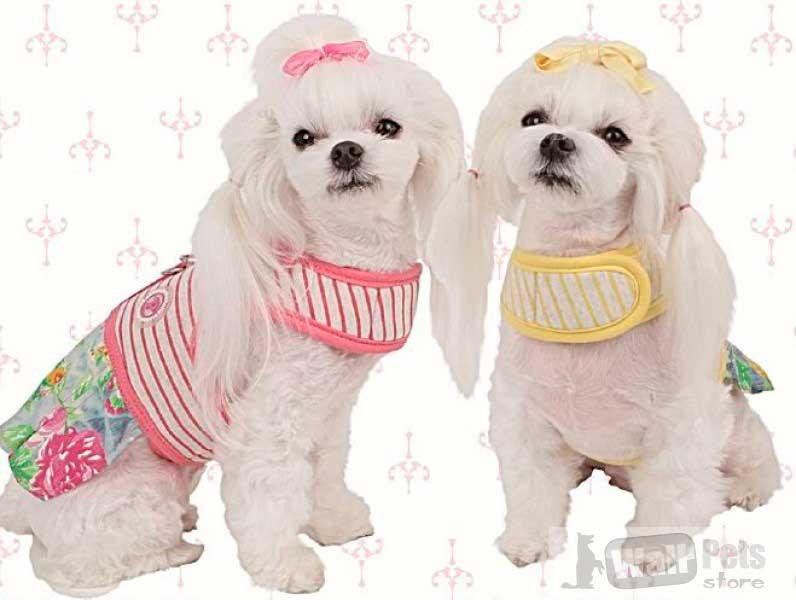 Шлейка для собак цветная