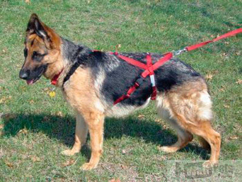 Шлейка для ездовых собак(Скиджоринг Кани -кросс упряжки санях)