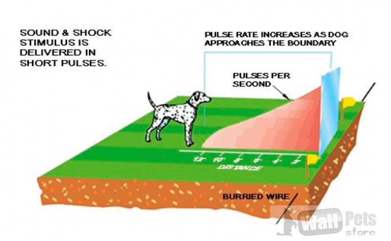Беспроводной электронный забор для собак