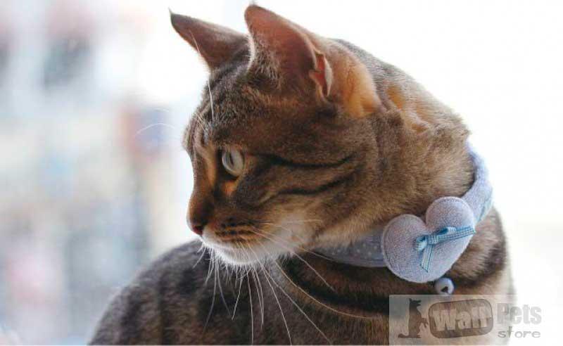 Ошейник на кошку с сердечком