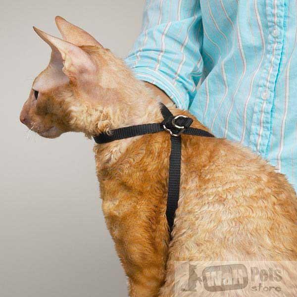Как сделать шлейку для кота