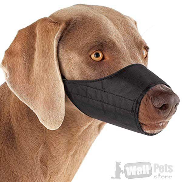 Намордник на  собак