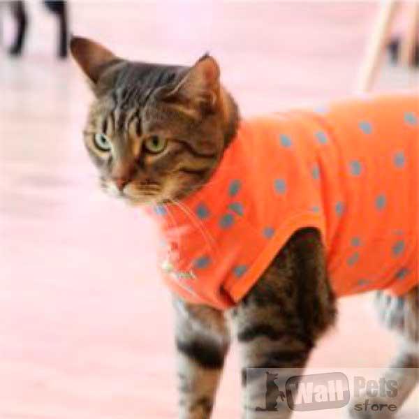 Свитер для кошек в горох ( одежда для кошек)