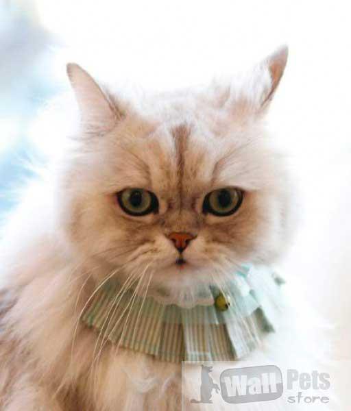 Ошейник на кошку с кружевом