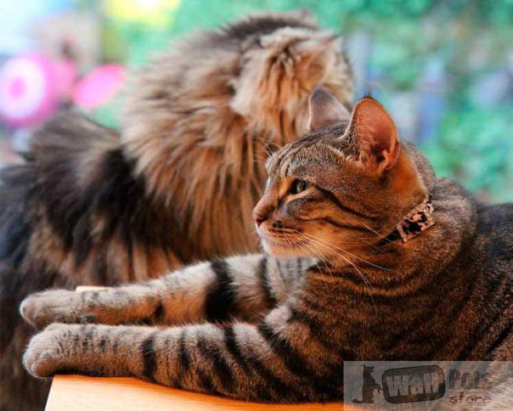 Ошейник на кошку, леопард