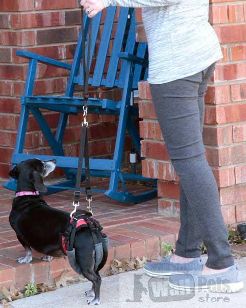 шлейка для пожилых и больных собак