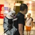 Рюкзак для собак и кошек до 15 кг